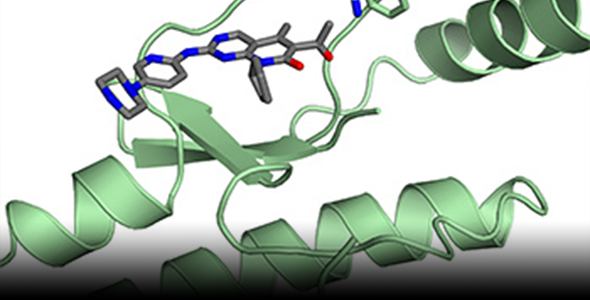 The breast cancer drug palbociclib (grey) interacts with its target protein CDK4 (green) in this structural model. Binding of the activator protein p27 to CDK4 changes CDK4 structure such that the drug loses potency.