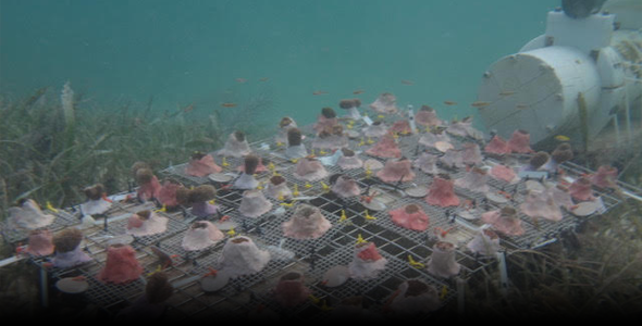 Control site for coral acidification study, photo by Donald Potts