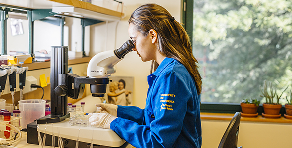 Photo of microscope research by Elena Zhukova