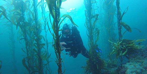 Volunteer divers collected data in kelp forests from Alaska to Baja California.