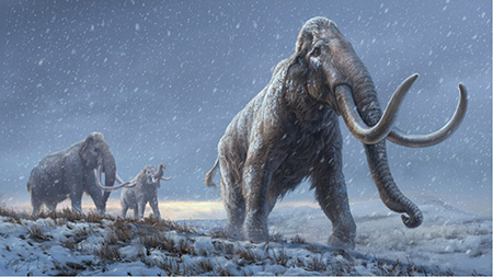This illustration represents a reconstruction of the steppe mammoths that preceded the woolly mammoth, based on genetic analysis of ancient mammoth DNA. (Illustration by Beth Zaiken/Centre for Palaeogenetics)