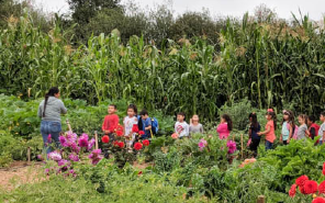 The Calabasas Community Garden is a resource for education, health, and belonging for local families in the Watsonville area. Photo courtesy of the (H)ACER program.